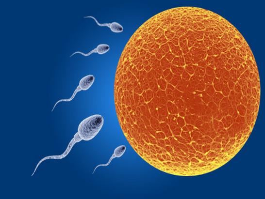 Los alimentos que aumentan la fertilidad femenina y masculina - Alimentos fertilidad masculina ...