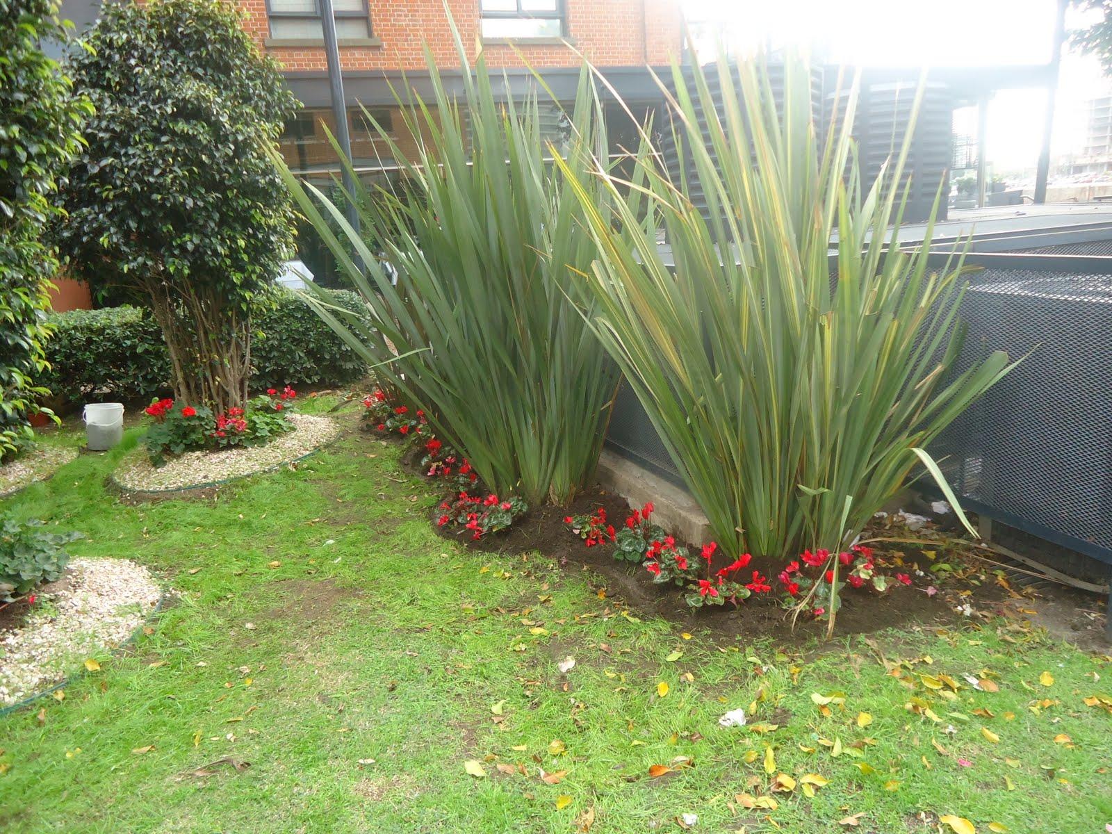 Servicios de jardineria en barrio colegiales telf 4849 5113 - Servicios de jardineria ...