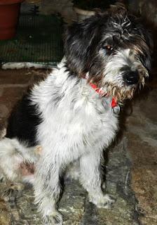 Βρεθηκε σκυλακι στο Γαλατσι (Γαλατσιου οδος Νικηταρα-Δωριεων ). Το αναζητά κανείς?