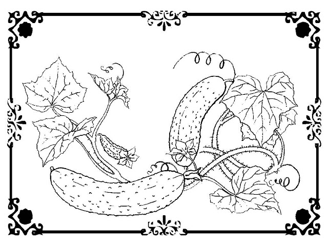 coloring pages of cucumber