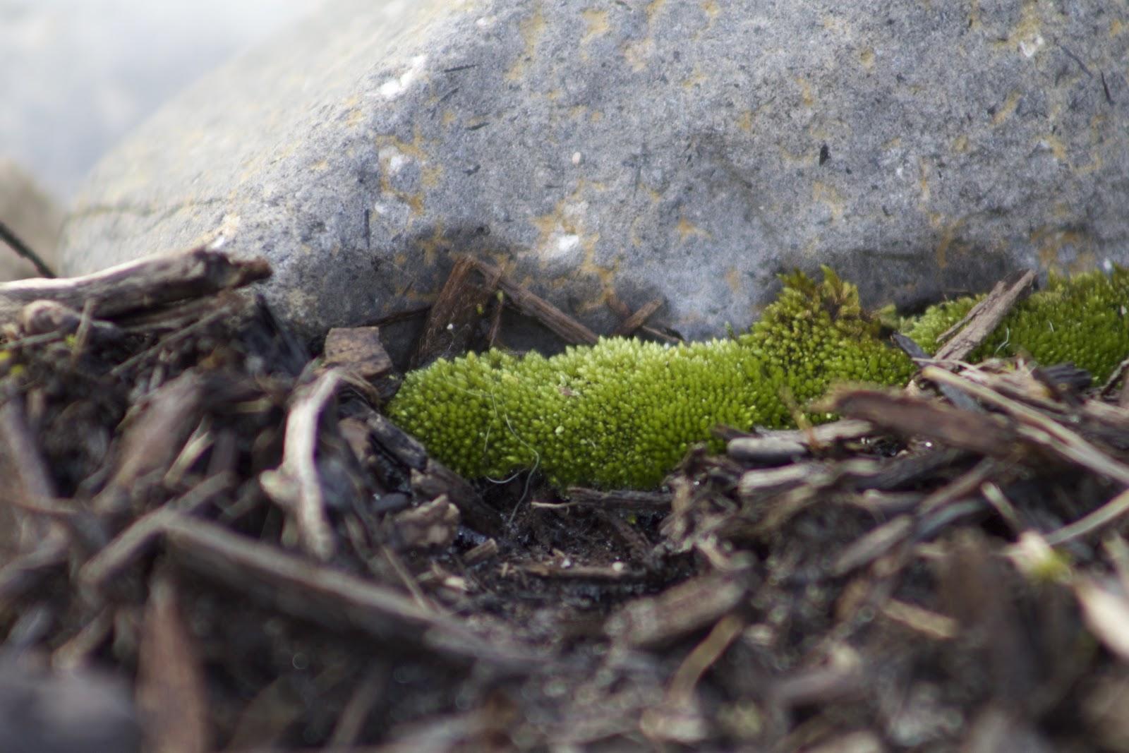 dense moss clump