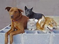 3 dogs and cat