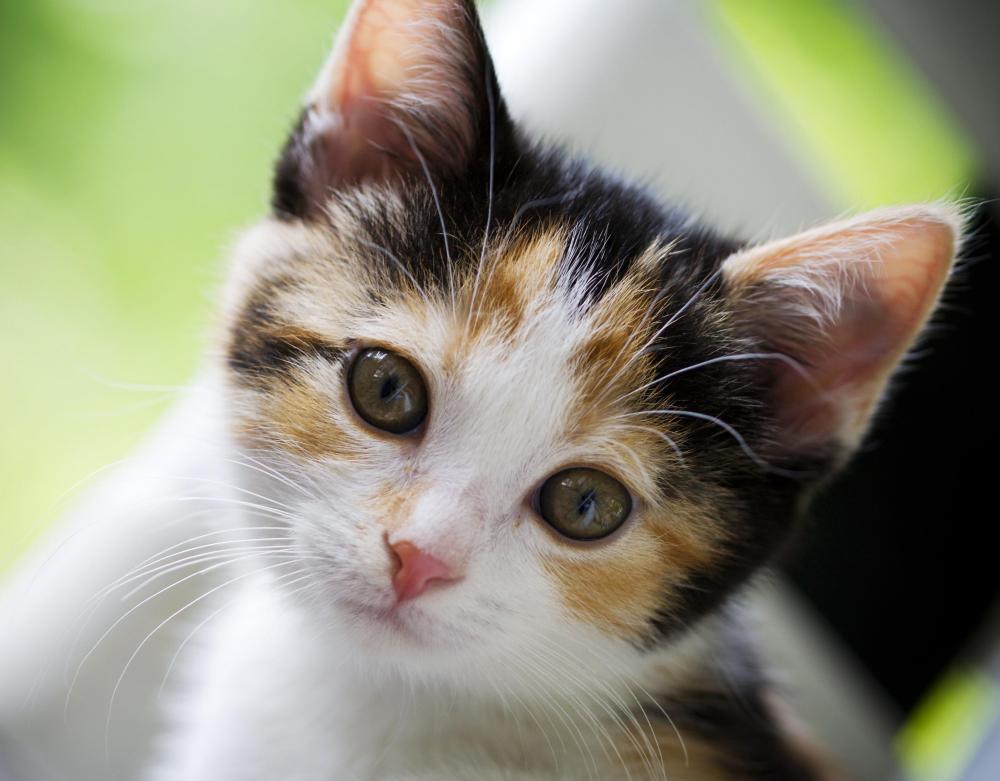 Hukum Membunuh Menabrak Kucing Khazanah Islam Ku