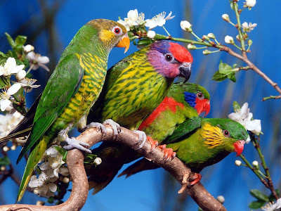 Colorful Parrot Bird Photos