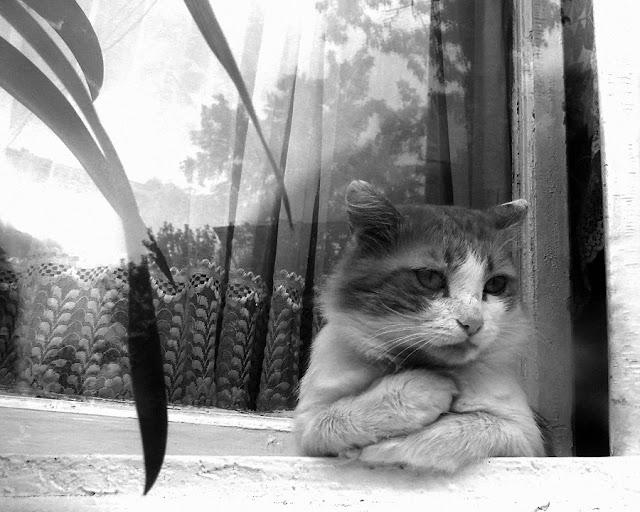 Trist kat kikker ud af vindue