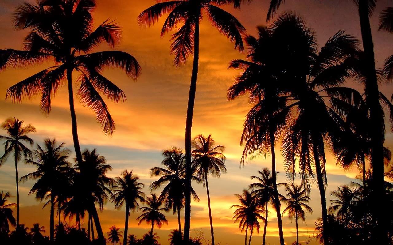 Sunset photos - Majestic Palm Trees