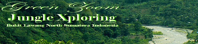 Green Zoom Jungle Xploring Bukit Lawang North Sumatera Indonesia