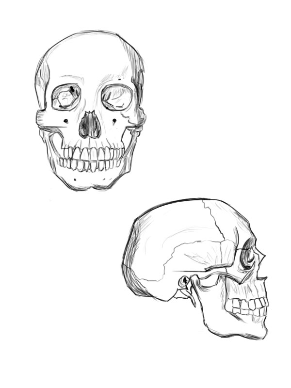 dibu-evolution: Estudiando anatomía