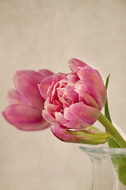 pink tulips textured Texture Tuesday floral
