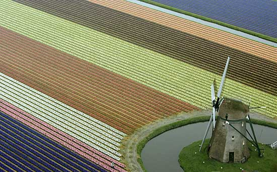 Primavera Olandese