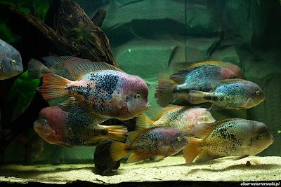 Centrala rybna