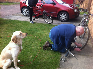 Picture of Guide Dog Laila watching authoritatively as a man, dave, blows up a tire.