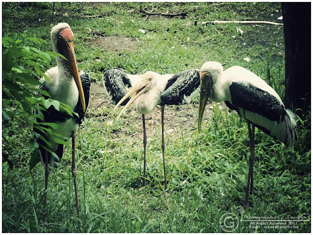 Photograph Bird
