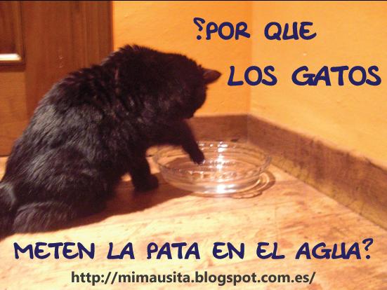 gatos-meten-pata-agua