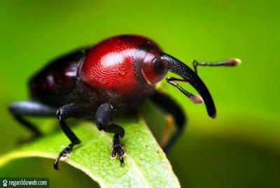 Photos rigolotes et extraordinaires Animal – Insecte v71