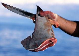 Matança de tubarões