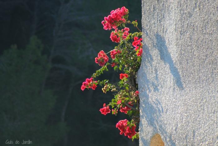 Flores y plantas de invierno en exterior e interior guia de jardin - Plantas de invierno ...