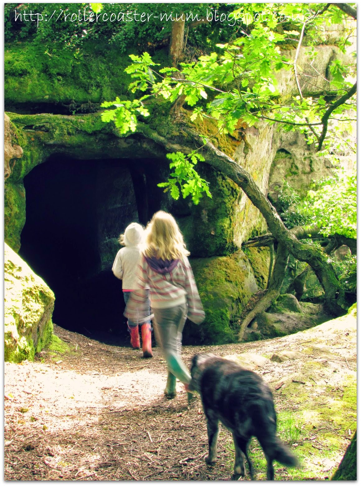 the tunnel, Lake Wood, Woodland Trust