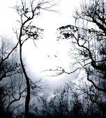 Bakıpta göremeyen gözlere inat bakmayı öğret...