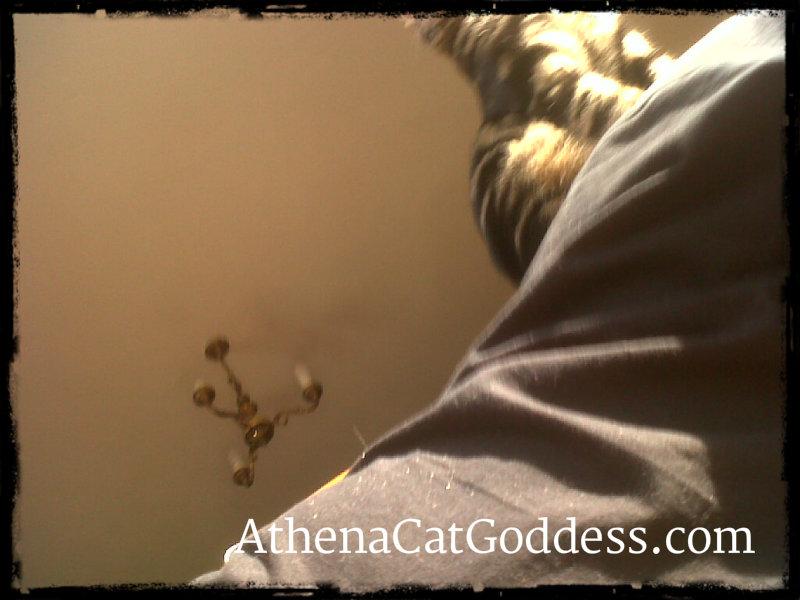 Athena on her mum's back