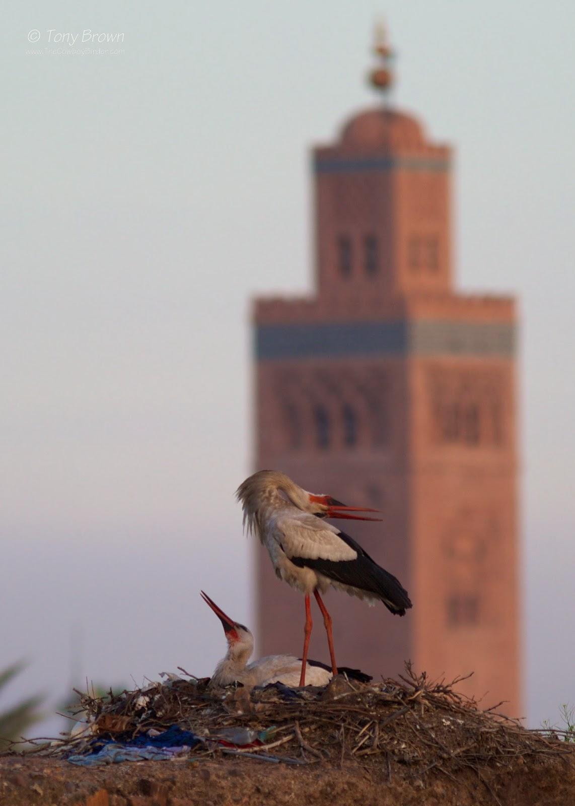 Marrakesh, Morocco, Koutoubia