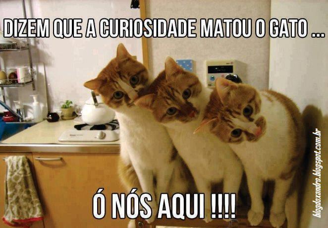 curiosidade.png (662×460)