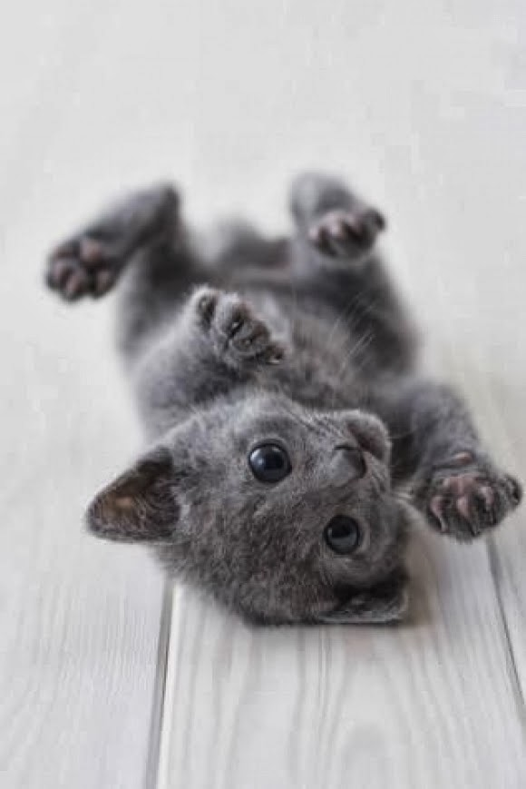 7 Adorable kittens every cat lover must see