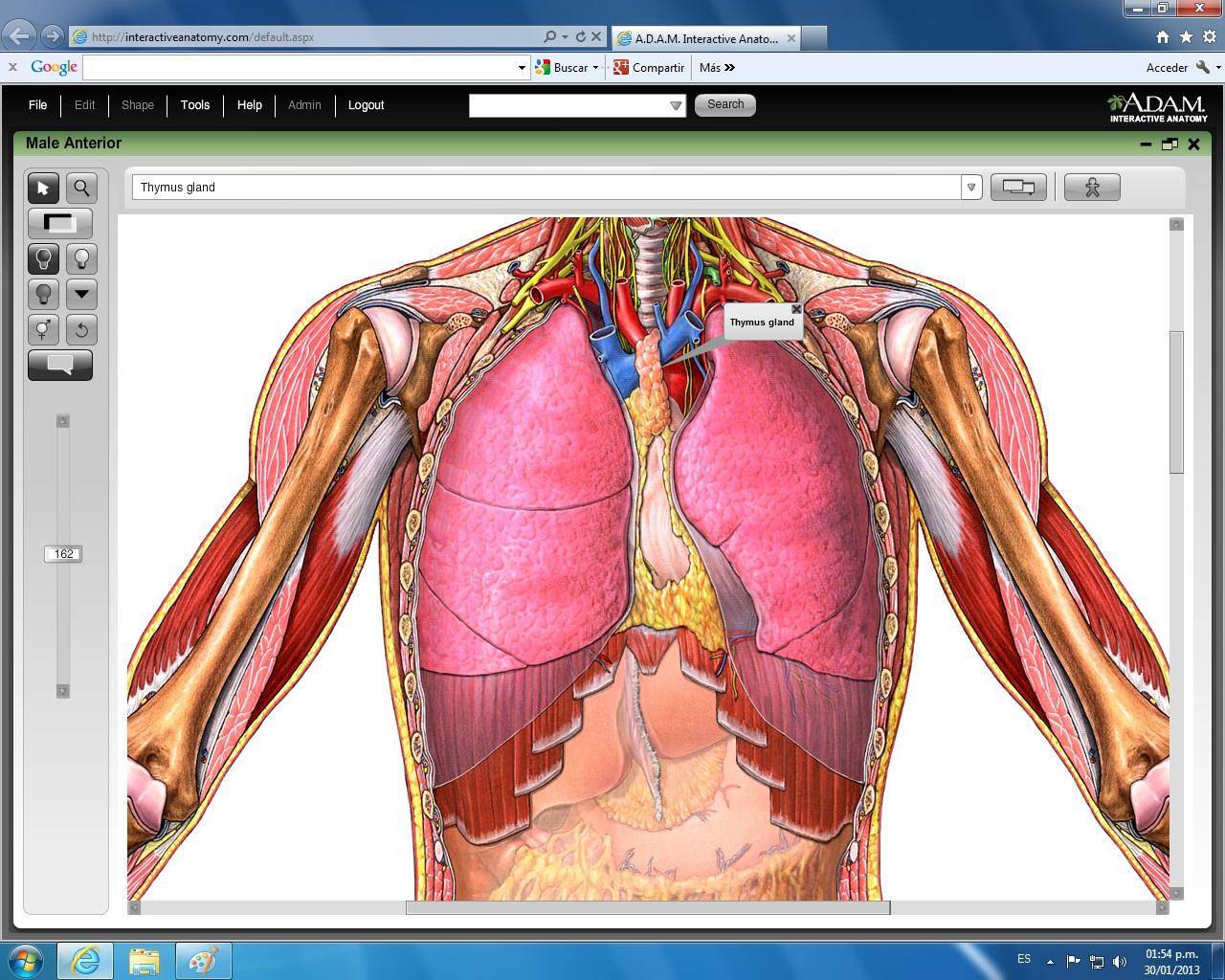 sistema cardiovascular : febrero 2013