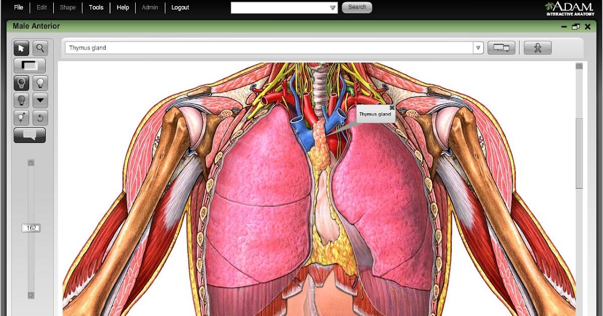 Sistema Cardiovascular Resumen Del Sistema Circulatorio