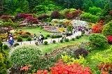 เทศกาลดอกไม้ที่ The Garden of Morning Calm
