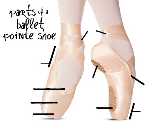 Pointe Shoe Diagram Shoes Collections