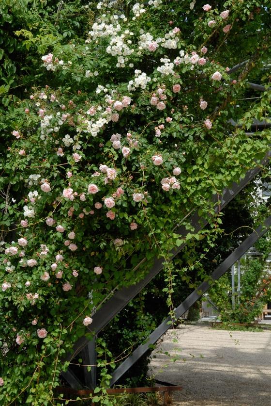 Avante Garden: MFO Park