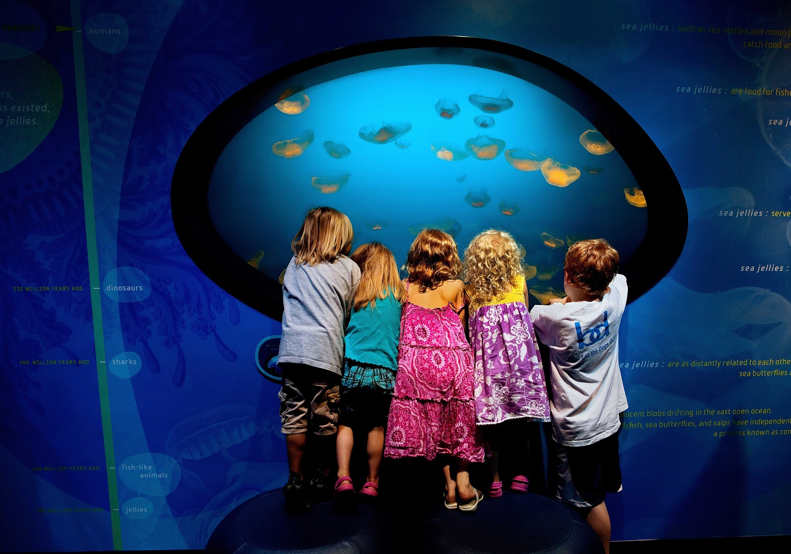 Hines Sight Blog Five Family Friendly Attractions Not To