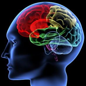 Otak Belakang