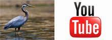 Audubon TERN On-Line Videos