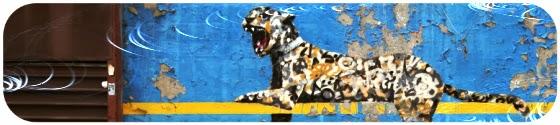 léopard yankee stadium