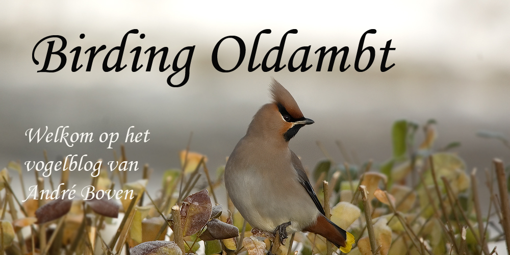 Birding Oldambt