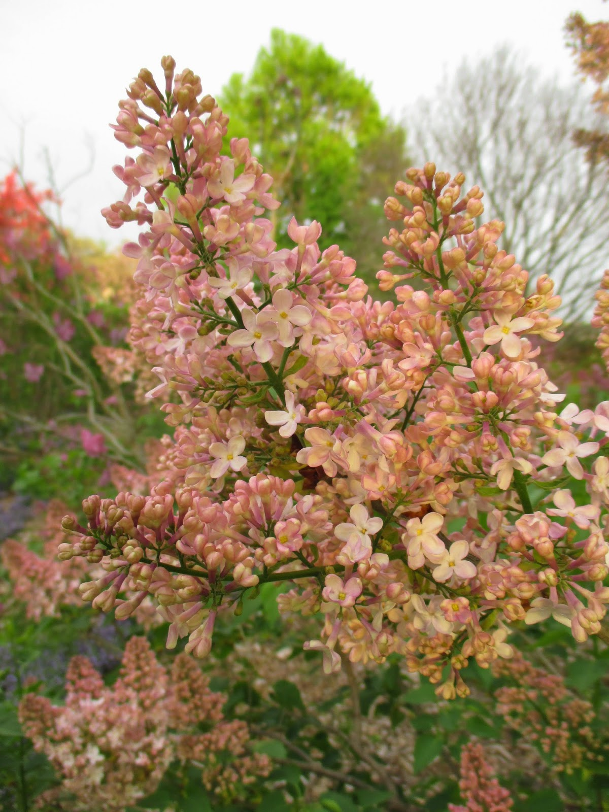 Rotary Botanical Gardens - Hort Blog: The Sale Continues...