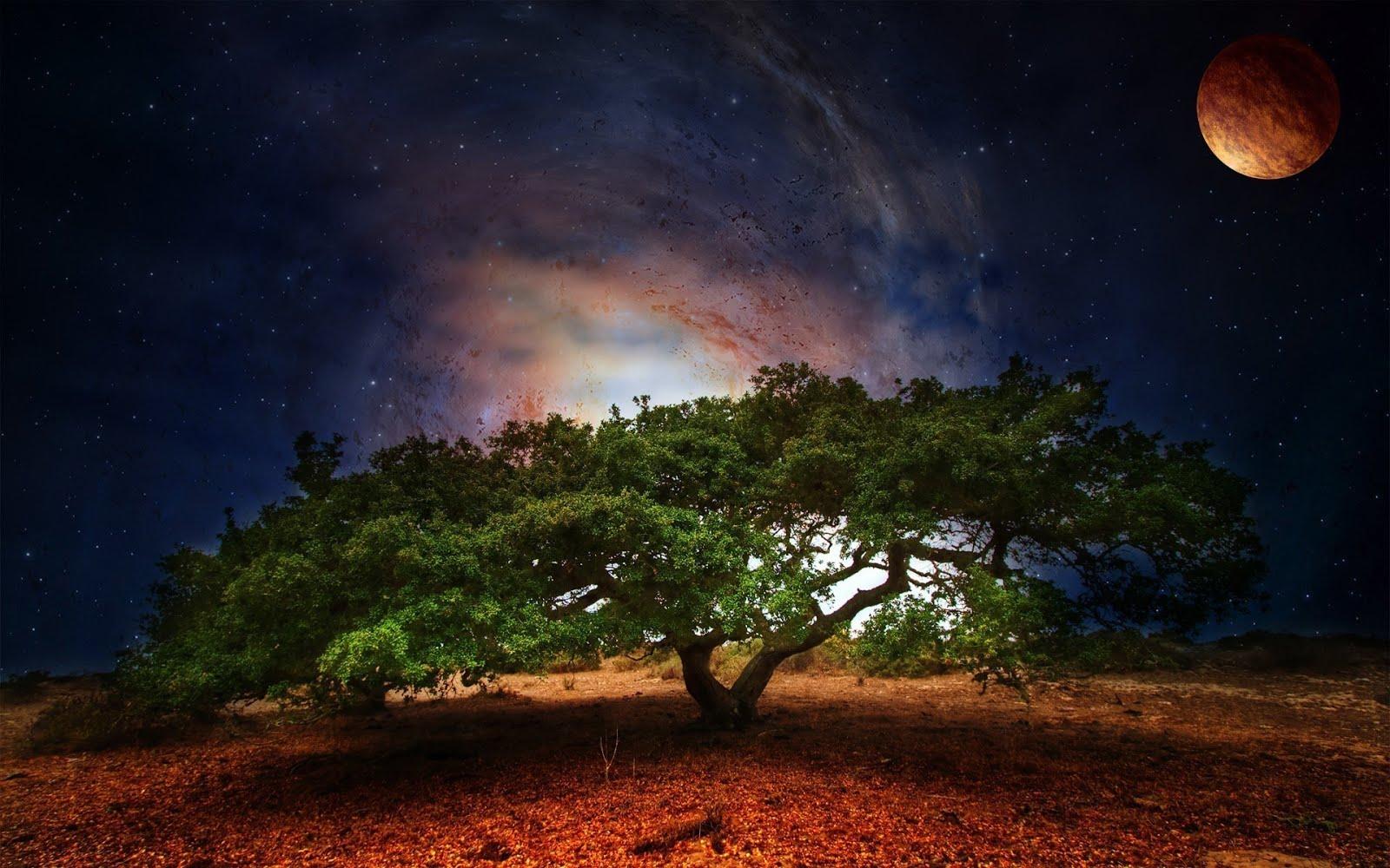 http://4.bp.blogspot.com/-gEI7Lg69u8E/UHyvGRi83pI/AAAAAAABLo0/wpdYcHvdCk0/s1600/giant-tree-1920x1200-wallpaper-paisajes-fantasticos-e-increibles.jpg