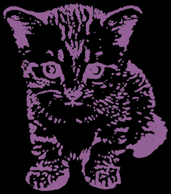 子猫(動物)