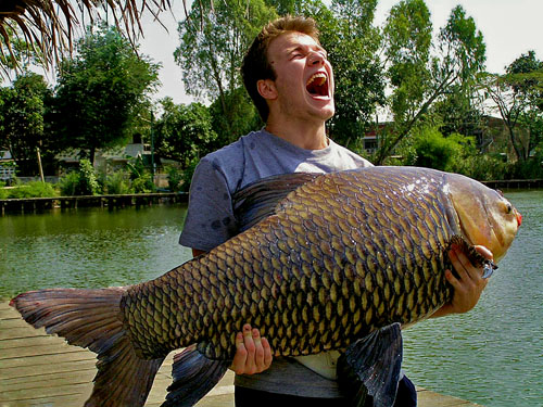 Ornamental fish aquarium siamese carp for Ornamental carp