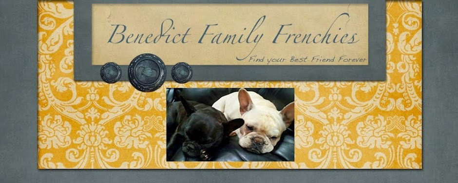 Benedict Family Frenchies