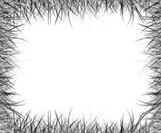 Bingkai Foto Hitam Putih dengan corak seperti rumput.