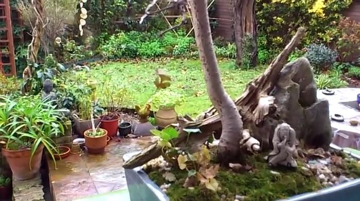 vídeo,haiku,bambu,bonsai