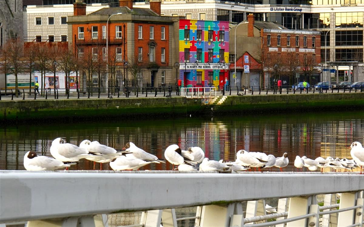 Dublin image, sea gull, buildings