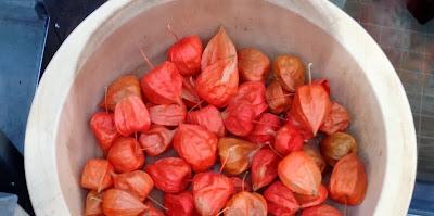 jødekirsebær, Physalis alkekengi