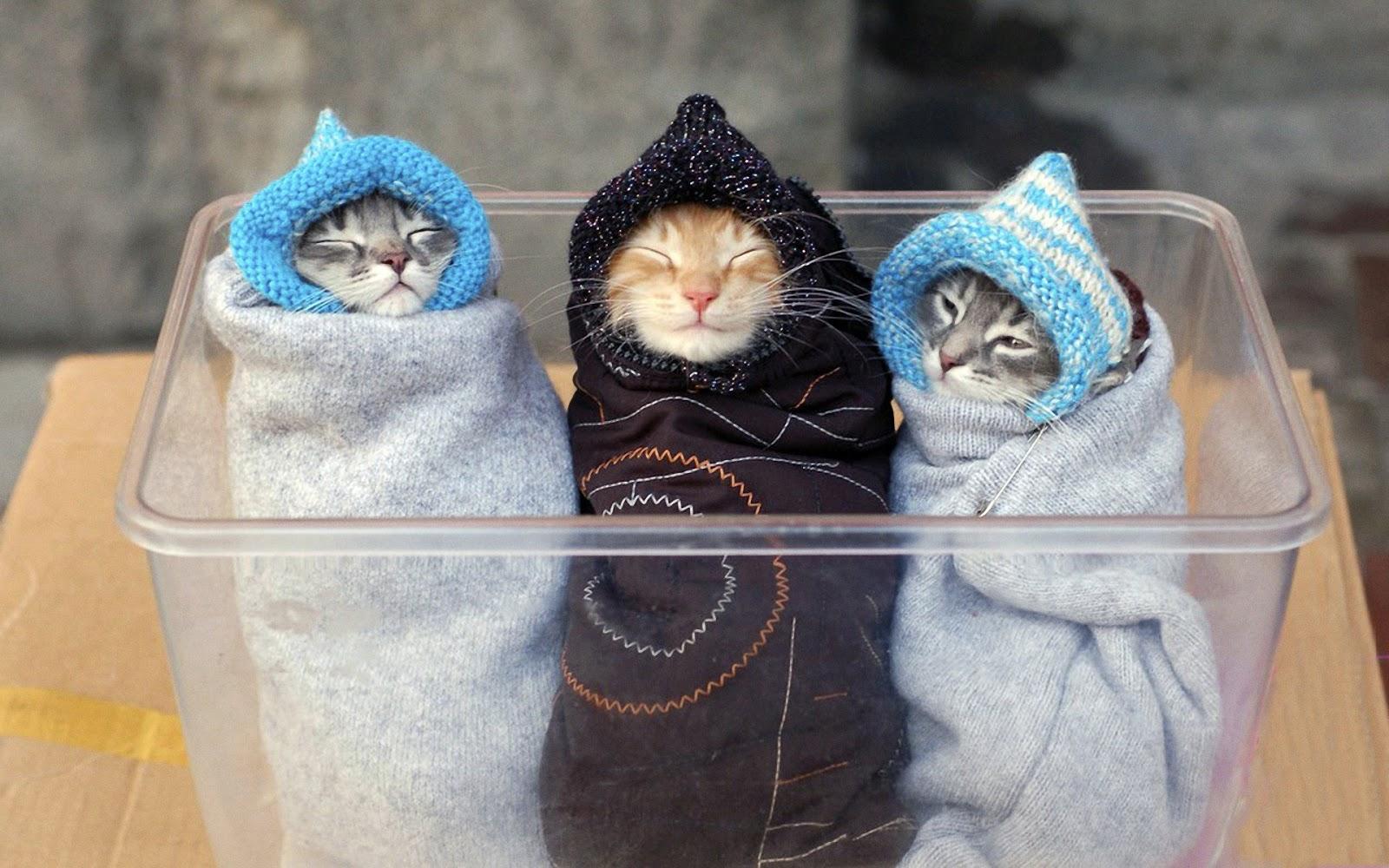 Hintergrundbilder Katzen Kostenlos Downloaden - Wallpaper kostenlos downloaden GIGA