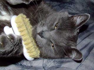 ข้อดีของการแปรงขนให้แมว