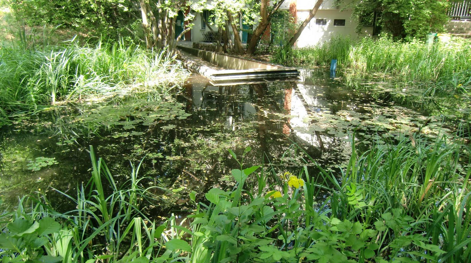 Promenade d 39 une fleur urbaine pause au jardin naturel for Jardin naturel