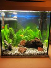 Mitt tredje akvarium